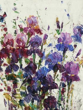 Iris Blooming I by Tim OToole
