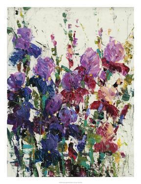 Iris Blooming II by Tim OToole