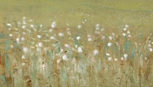 Meadow Blossoms II by Tim OToole