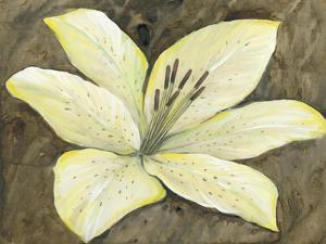 Neutral Lily II by Tim OToole