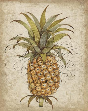 Pineapple Study II by Tim OToole