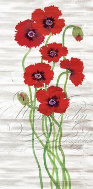Red Poppy Panel II by Tim OToole