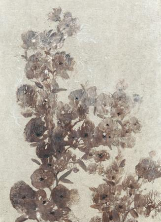 Sepia Flower Study I by Tim OToole