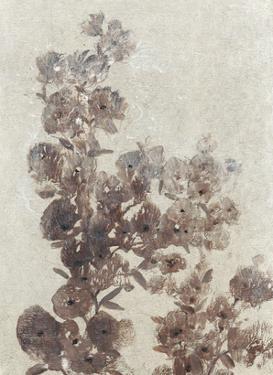 Sepia Flower Study I by Tim OToole