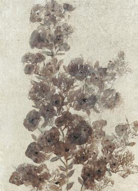Sepia Flower Study II by Tim OToole