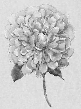 Silvertone Floral I by Tim OToole