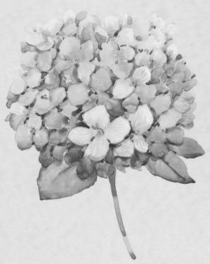Silvertone Floral II by Tim OToole