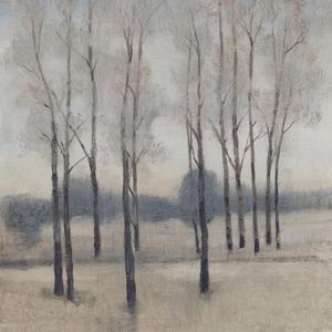 Soft Light I by Tim OToole