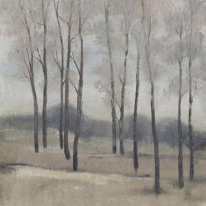 Soft Light II by Tim OToole