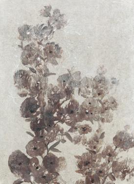 Sepia Flower Study I by Tim