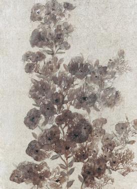 Sepia Flower Study II by Tim