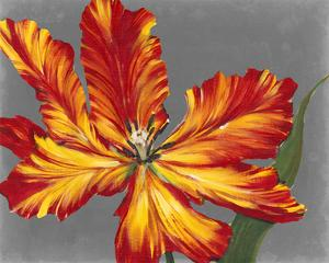 Tulip Portrait II by Tim