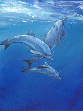 Under Sea Dolphins by Tim