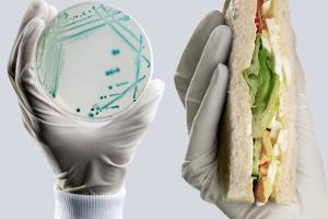 E. Coli Food Poisoning by Tim Vernon