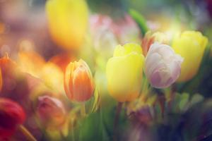 Flowers in Color Filters by Timofeeva Maria