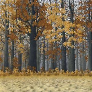 Autumn Wood by Timothy Arzt
