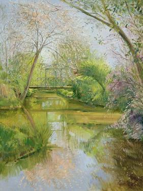 Full Blossom by Timothy Easton