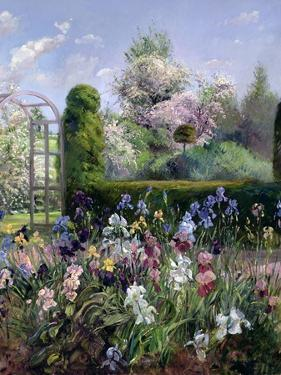 Irises in the Formal Gardens, 1993 by Timothy Easton