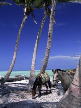 Horses, Playa Juanillo, Dominican Republic by Timothy O'Keefe
