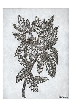 Oak Tree 1 by Tina Carlson