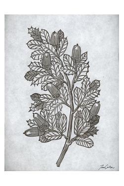Oak Tree 2 by Tina Carlson