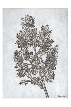 Oak Tree 3 by Tina Carlson
