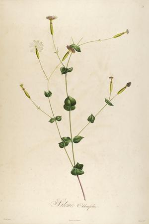 Vintage Botanical 178