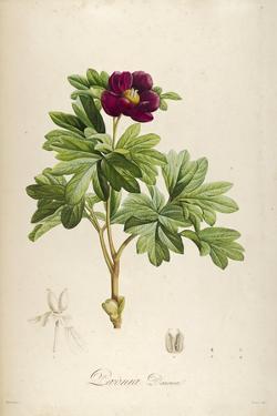 Vintage Botanical 186 by Tina Carlson