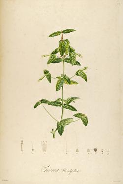 Vintage Botanical 192 by Tina Carlson