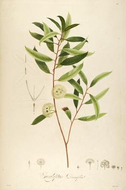 Vintage Botanical 194 by Tina Carlson