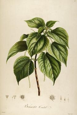 Vintage Botanical 198 by Tina Carlson
