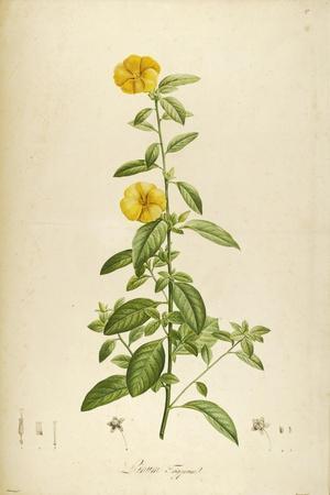 Vintage Botanical 202