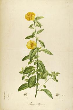 Vintage Botanical 202 by Tina Carlson