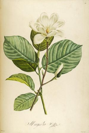 Vintage Botanical 208