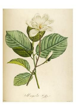 Vintage Botanical by Tina Carlson