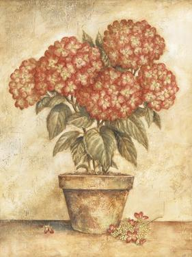 Potted Red Hydrangea by Tina Chaden