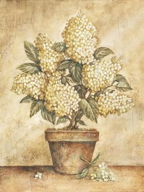 Potted White Hydrangea by Tina Chaden
