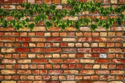 Brick Wall and Ivy by Tina Lavoie