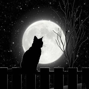 Moon Bath II by Tina Lavoie
