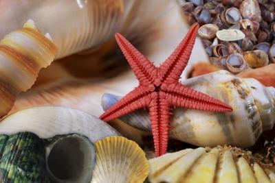 Seashells by Tina Lavoie