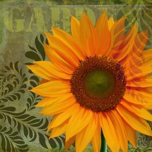 Summer Sun II by Tina Lavoie