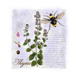 Thyme Herb by Tina Lavoie