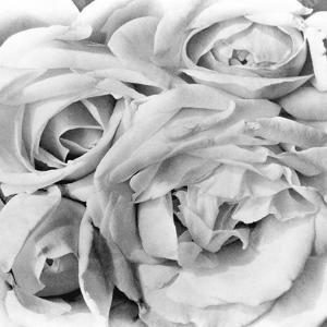 Roses, Mexico City, 1924 by Tina Modotti