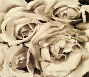 Roses by Tina Modotti