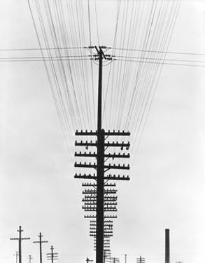Telegraph Wires, Mexico, 1925 by Tina Modotti
