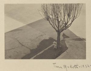 Tina Modotti, Tree with Dog, 1924 by Tina Modotti