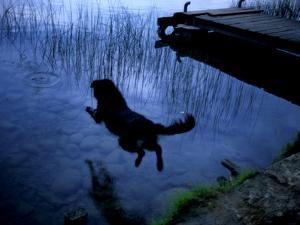 A Dog Jumping into Lake Banyoles by Tino Soriano