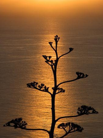 A View of an Eucalyptus Tree from Mirador De La Concepcion by Tino Soriano