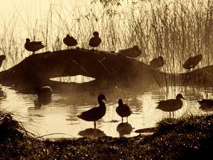 Ducks Along the Shore of Lake Banyoles by Tino Soriano