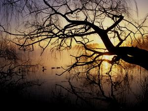 Ducks on Misty Lake Banyoles in Early Morning Light by Tino Soriano